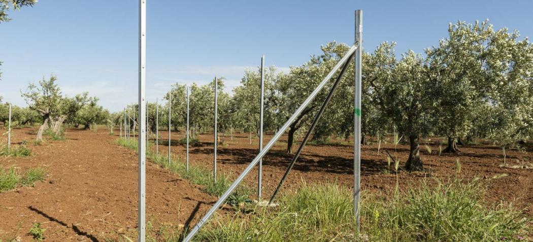 Recinzione terreno agricolo uliveto pali zincati