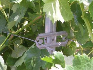 staffa distanzia fili ORMA impianto vigento tralci viti