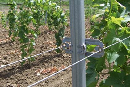 staffa distanzia fili ORMA vista retro impianto vigento tralci viti